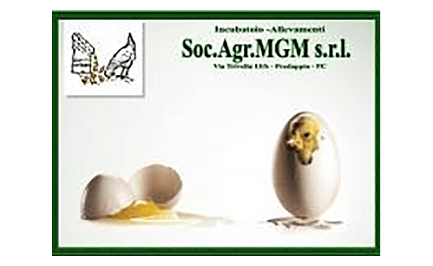 mgm_medium Convegni - Partner